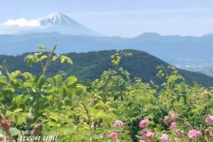 富士山の見える農場へ!!