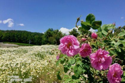 植物の恵みを実感! ナード・アロマテラピー協会の農場研修